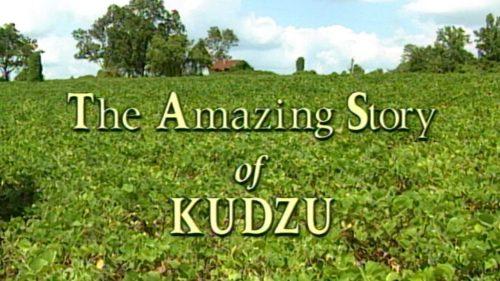 kudzu-still-1024x576